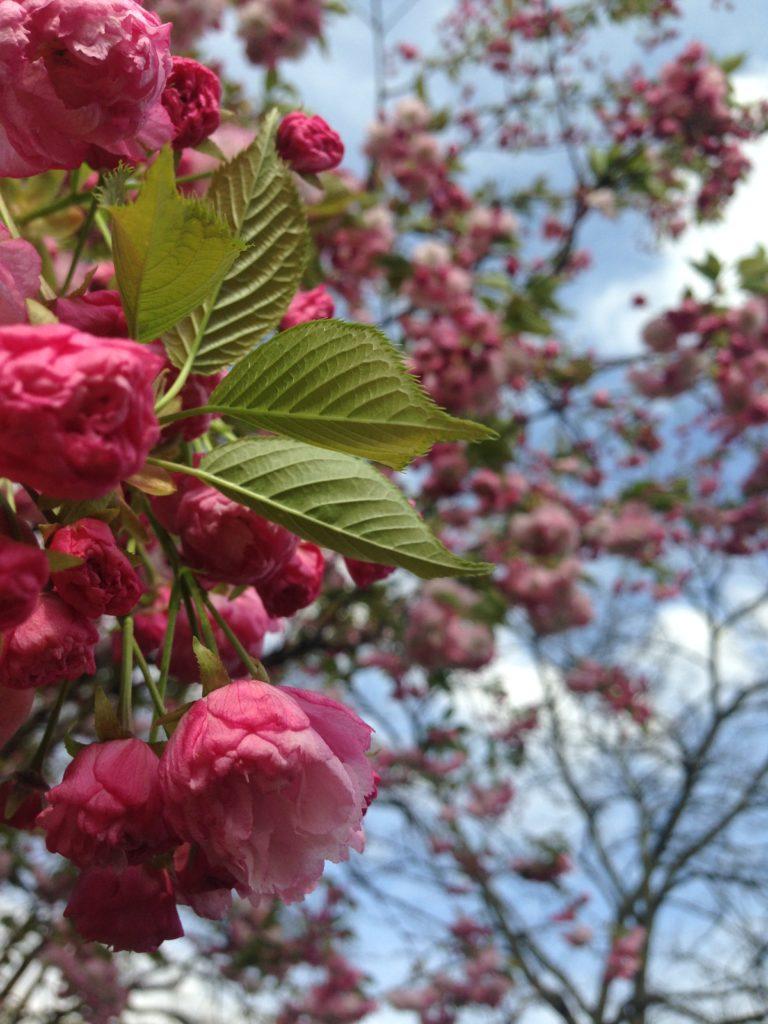 Ethno EdelShopper mit Alpaka Stickdatei von KathieKreativ • Blüte im Frühling • Nähen für Anfänger